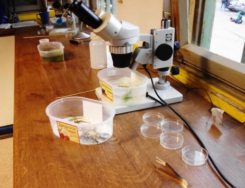 Seminar Süsswasserbiologie