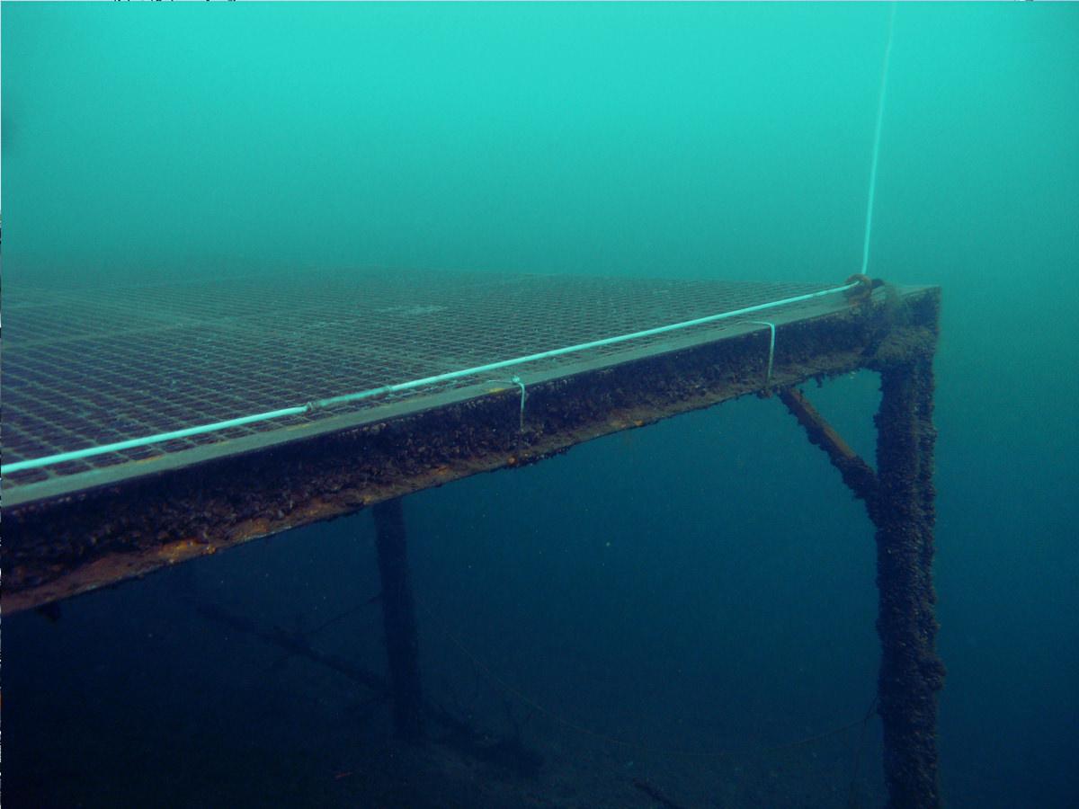 Unterwasserplatform - Hitdorfer See